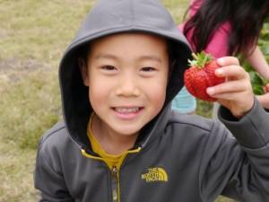 Strawberry-Joy