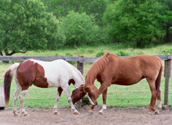 Programs with Horses